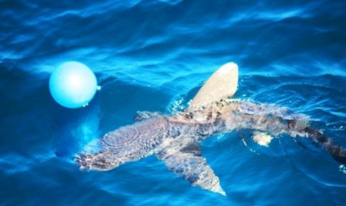 tiburon china